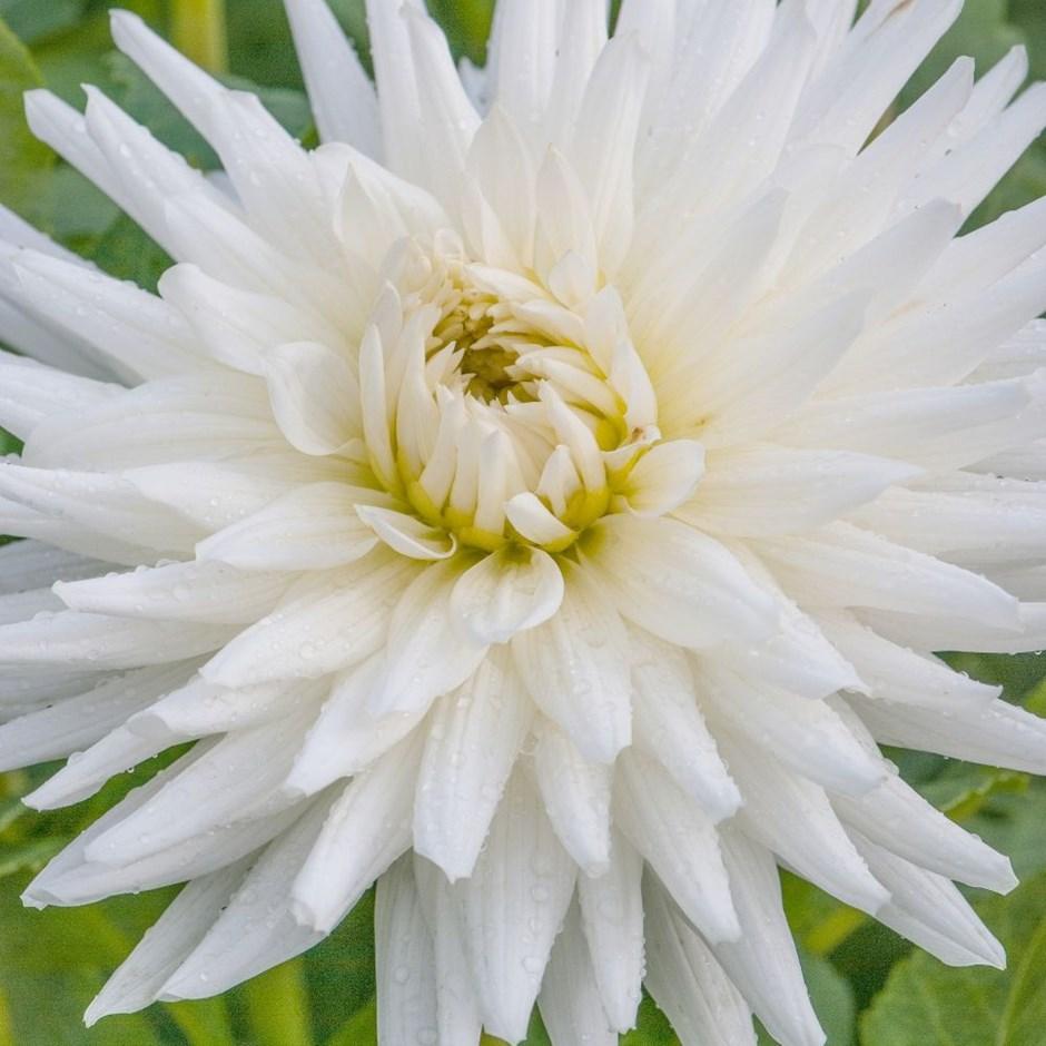 Las flores y sus partes