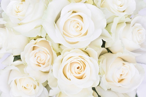 Flores de color blanco