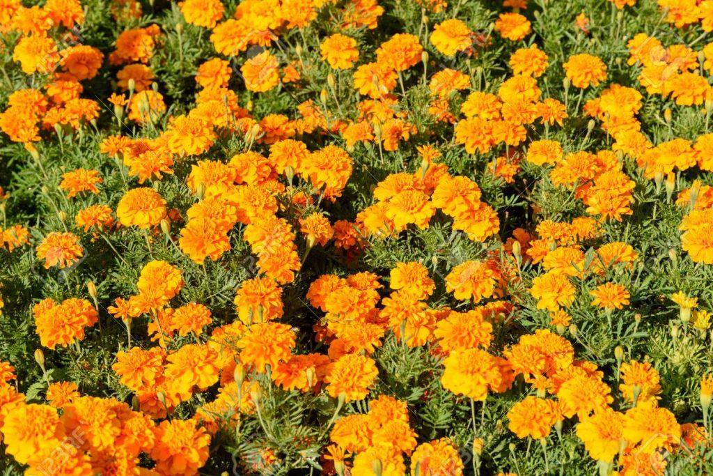 flores naranjas hermosas
