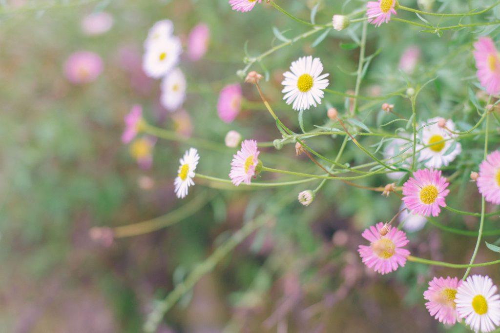 flores-otoño-2