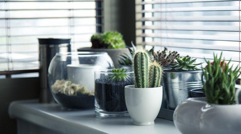 plantas interior casa