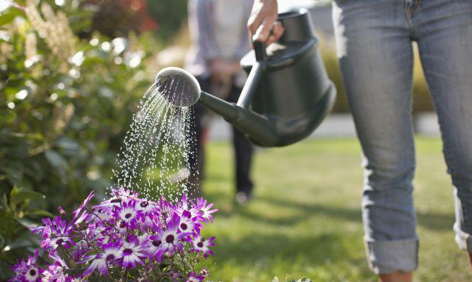 cuidados de las flores de verano
