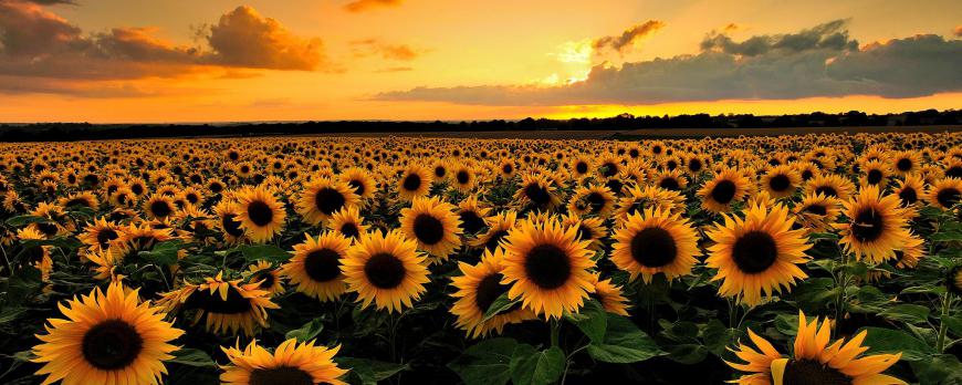Flores de temporada verano