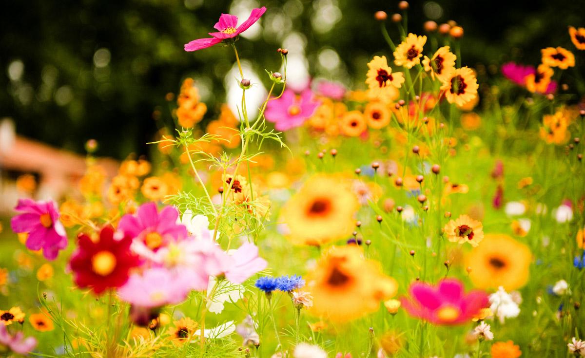 Flores de verano en pleno sol