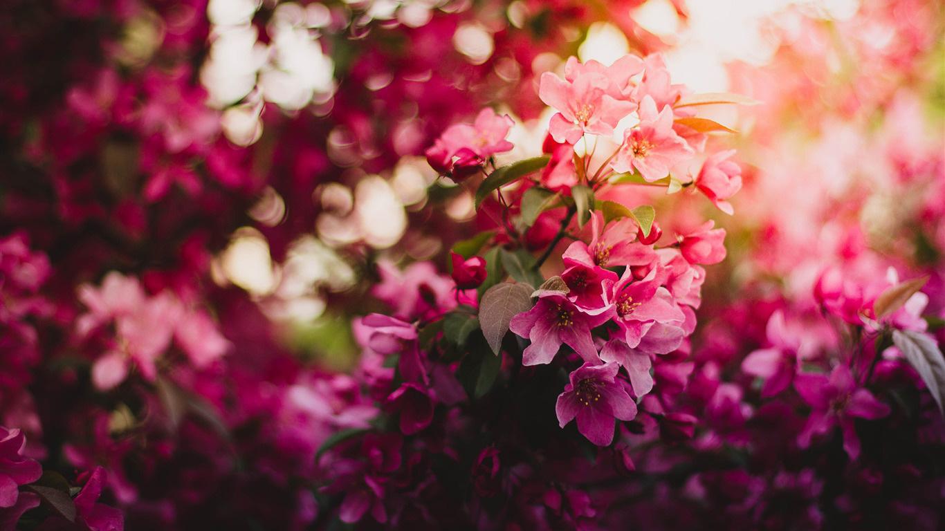 flores para hacer cosméticos