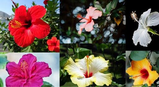 flores para tratar enfermedades