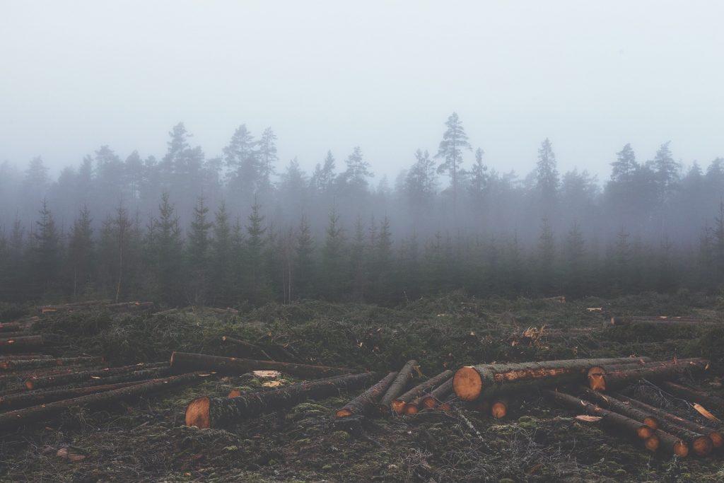 deforestacion terminos
