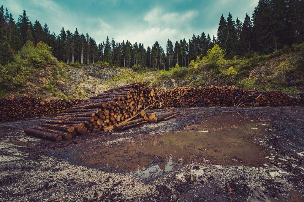 deforestacion actualidad