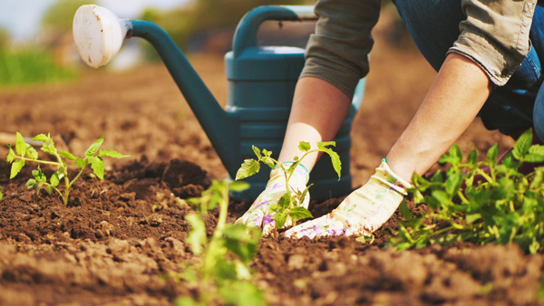 aprende a cuidar el jardín