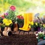 cómo cuidar el jardín facilmente