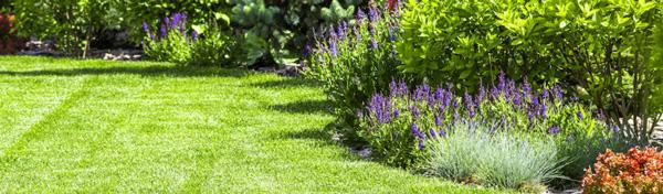 cómo cuidar el jardín