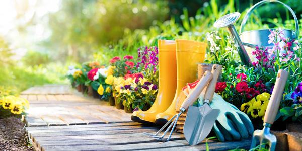 consejos para cuidar el jardín