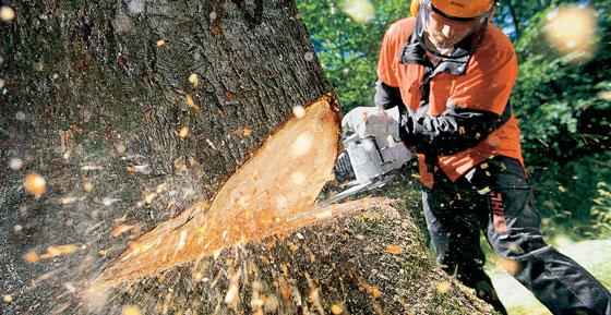 ropa de trabajos forestales