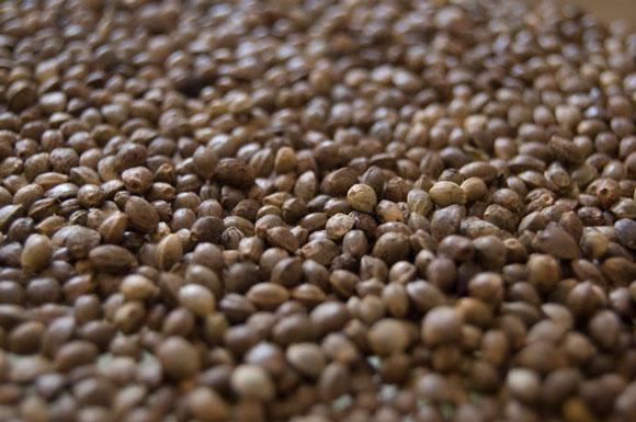 semillas de interior