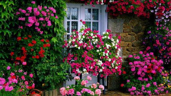 flores para el jardín