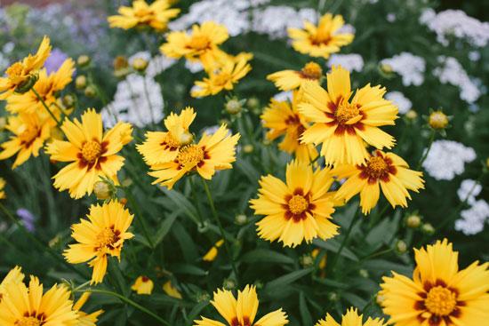 que flores elegir para el jardín