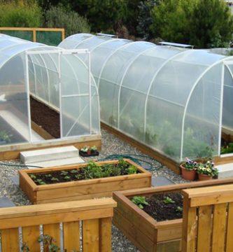 invernaderos para semillas cannabis
