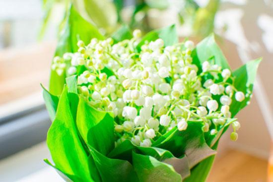 mejores flores aromáticas