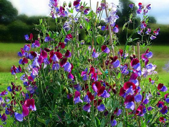 arbustos con flores para cultivar