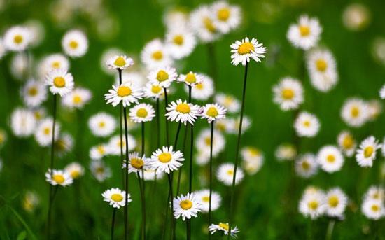 Flores para decorar en el jardín en verano