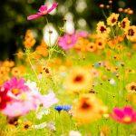 plantas resistentes al sol
